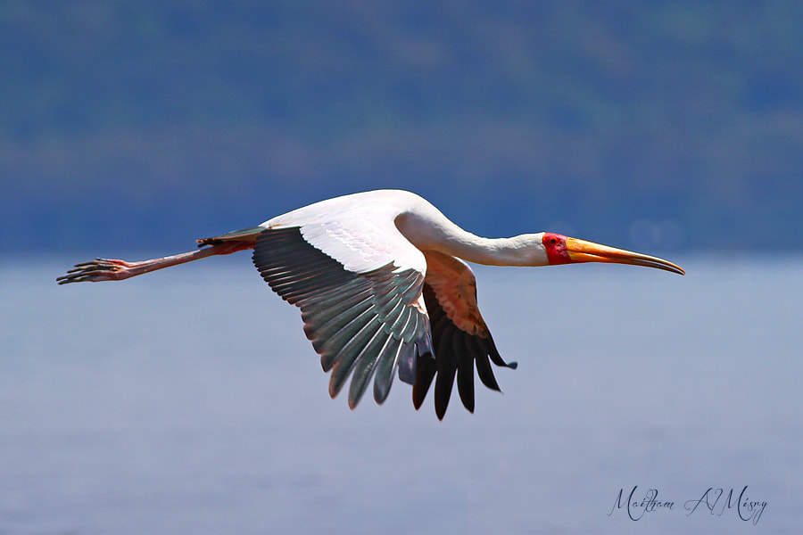 Photograph Wings by Maitham AlMisry on 500px