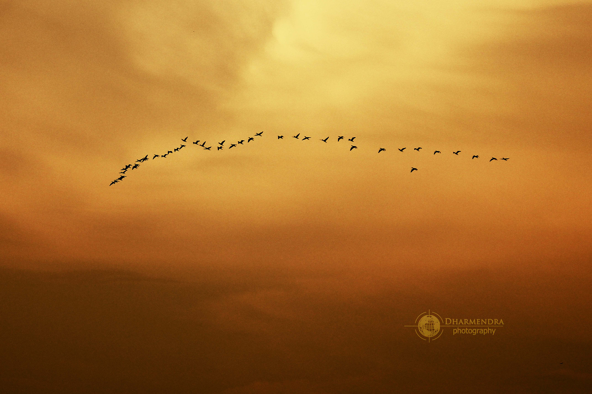 Photograph Flying Dreams by Dharmendra Kumar on 500px