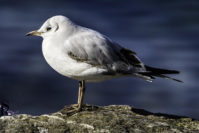 Photograph Boring Bird by Raphael Saxer on 500px