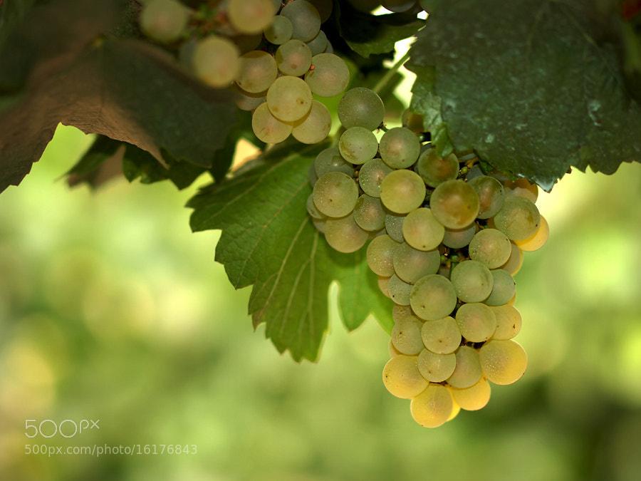Photograph white grapes by Jasmina Gorjanski on 500px