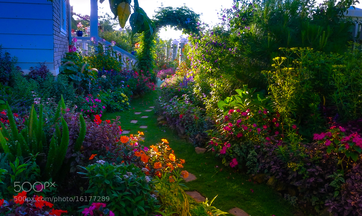 Photograph my garden by love leica on 500px