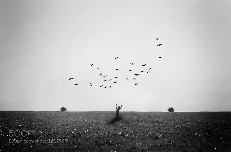 Photograph Birds by Полина Петровская on 500px