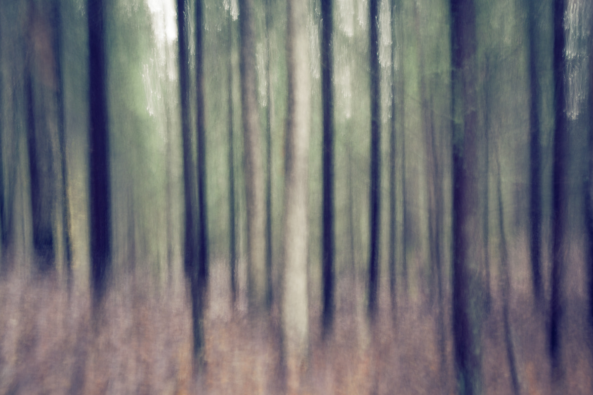 Photograph Forrest by Anders Johansson on 500px