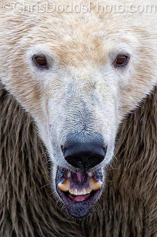 Photograph POLAR INTENSITY by Christopher Dodds on 500px
