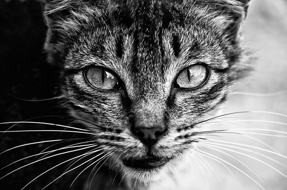 Photograph Cat by Javid Hashimov on 500px