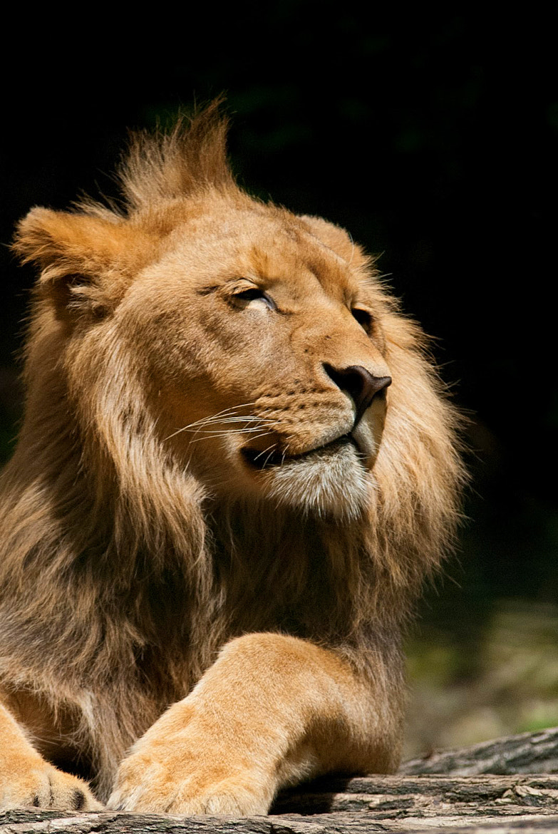 Photograph King by Yoaηη βoudon on 500px