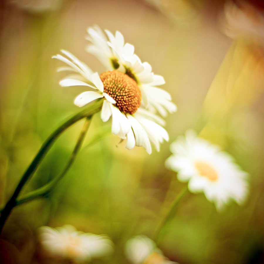 Photograph Spring treasures by Justyna Frąckowiak on 500px