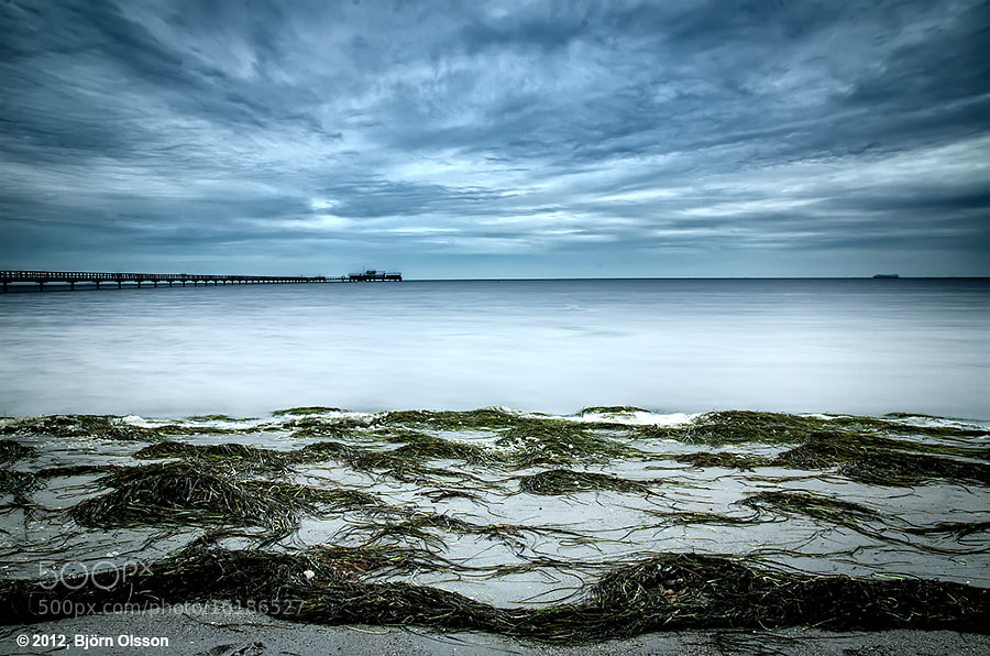 Seaweed by Björn Olsson (bjornsphoto) on 500px.com