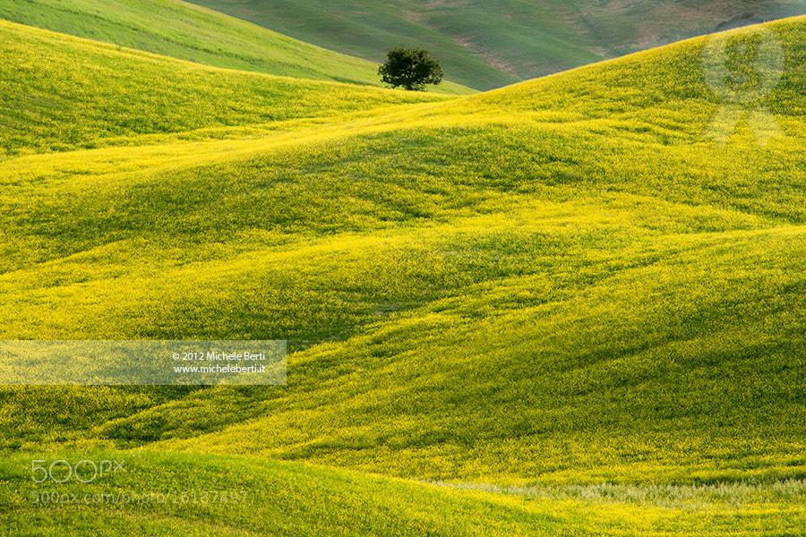 Photograph Tuscany Rolling Hills (May 2012) by michele berti on 500px