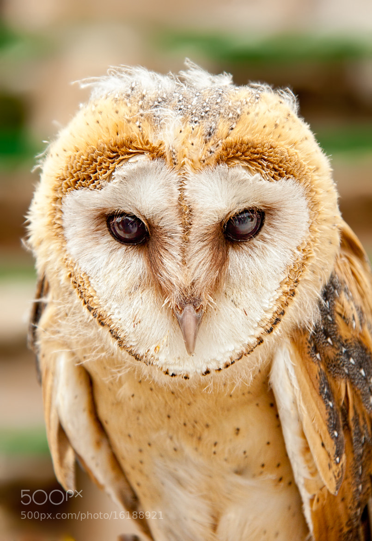 Photograph Owl wisdom by Andres Gutierrez on 500px