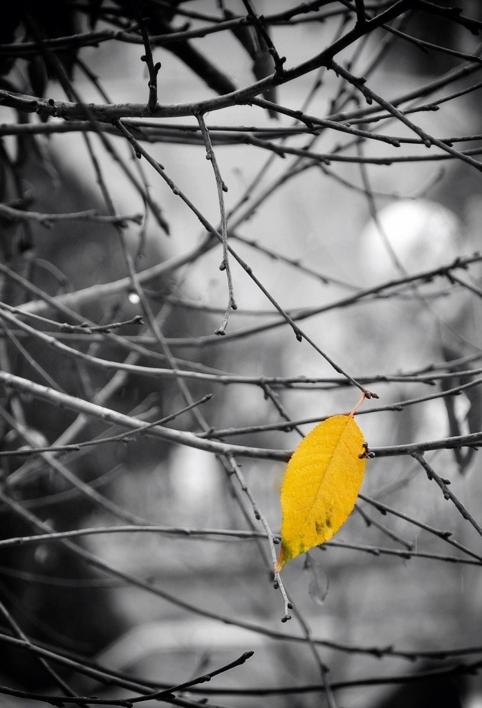 Photograph Yellow .. by Maryam Essa on 500px