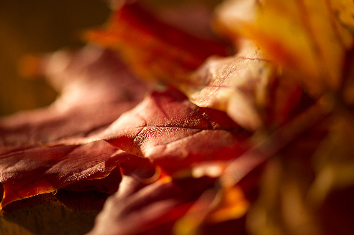 Photograph autumn by Gianluca Schivo on 500px