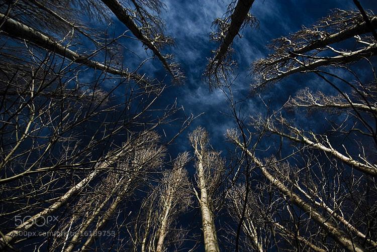 Photograph ... by Piotr Haskiewicz on 500px