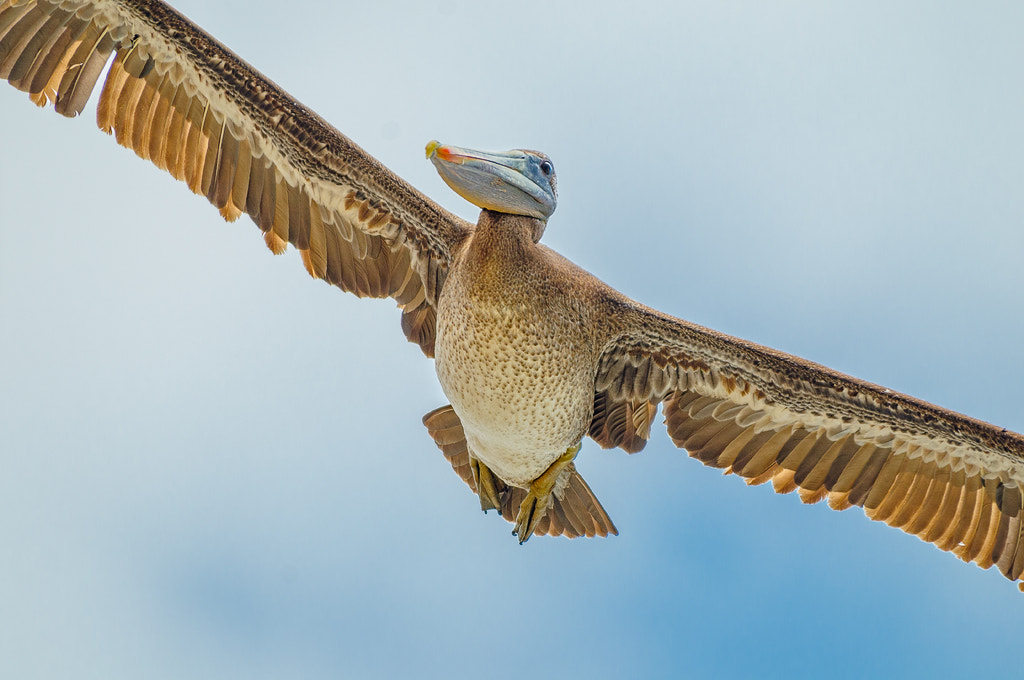 Photograph overhead pass by Dieter Schaefer on 500px