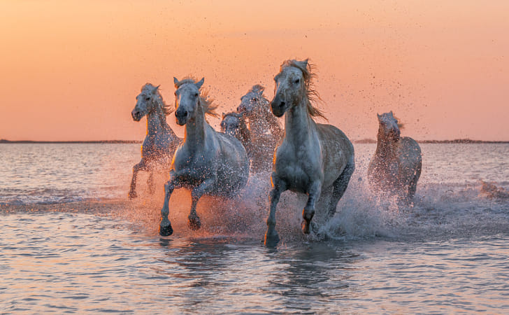 Camargue Angels by Heather Balmain on 500px