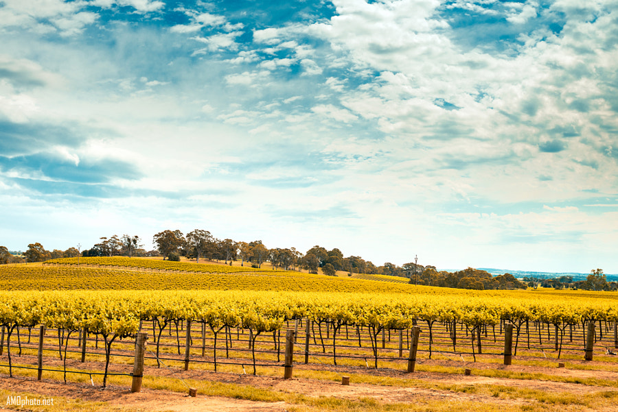 Barossa Valley by Andrey Moisseyev on 500px.com