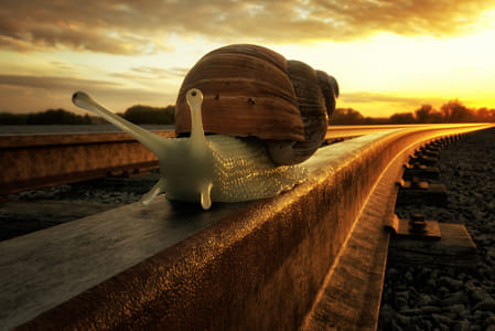 Just a rail snail by Klassy Goldberg on 500px