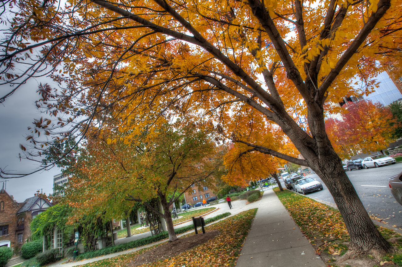 Photograph Fall in Kansas City #3 by Eric  Bowers on 500px
