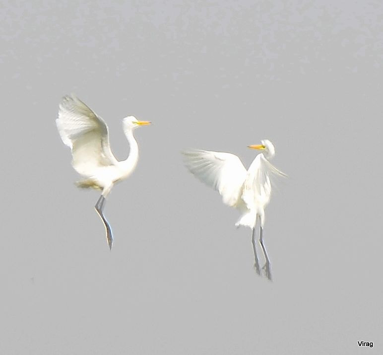 Photograph Fighting  by Virag Sharma on 500px