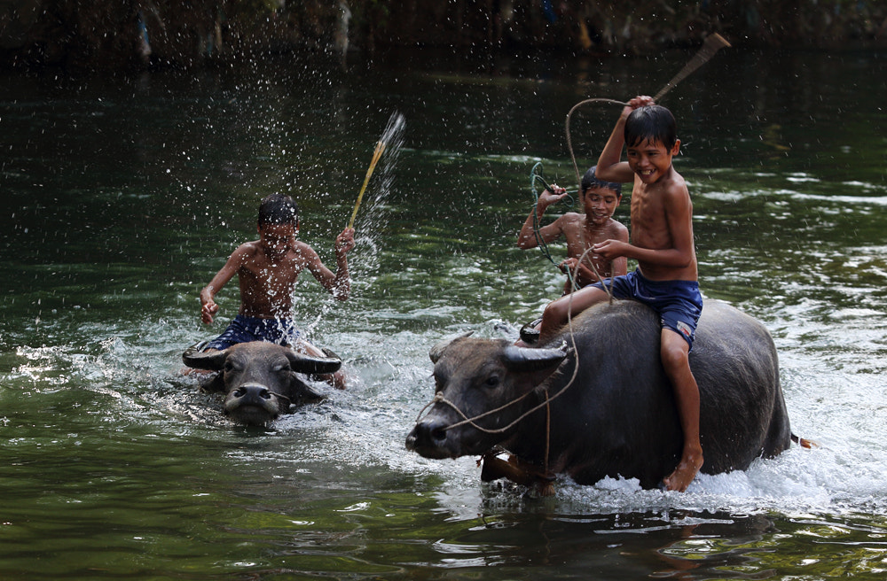 Photograph Buffalo Boys by Viet Hung on 500px