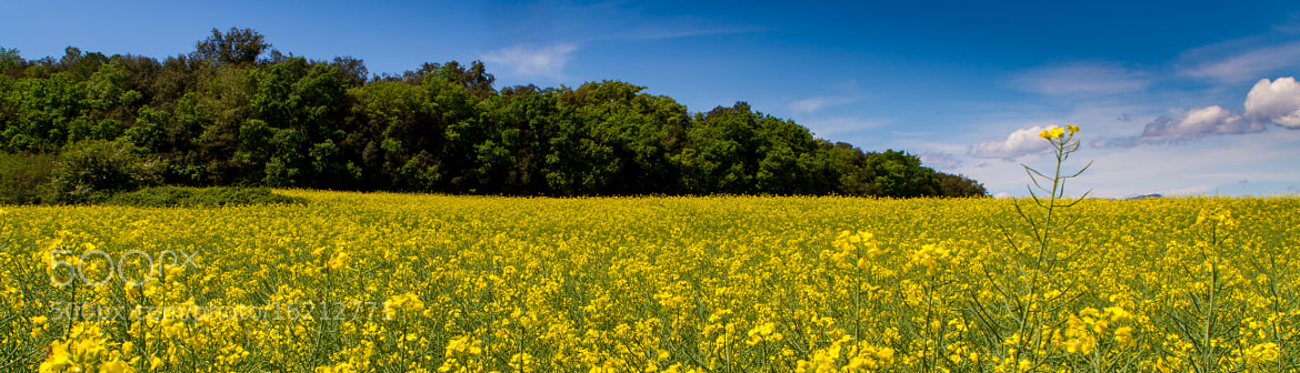Photograph Yellow Emporda by Victor Bultó on 500px