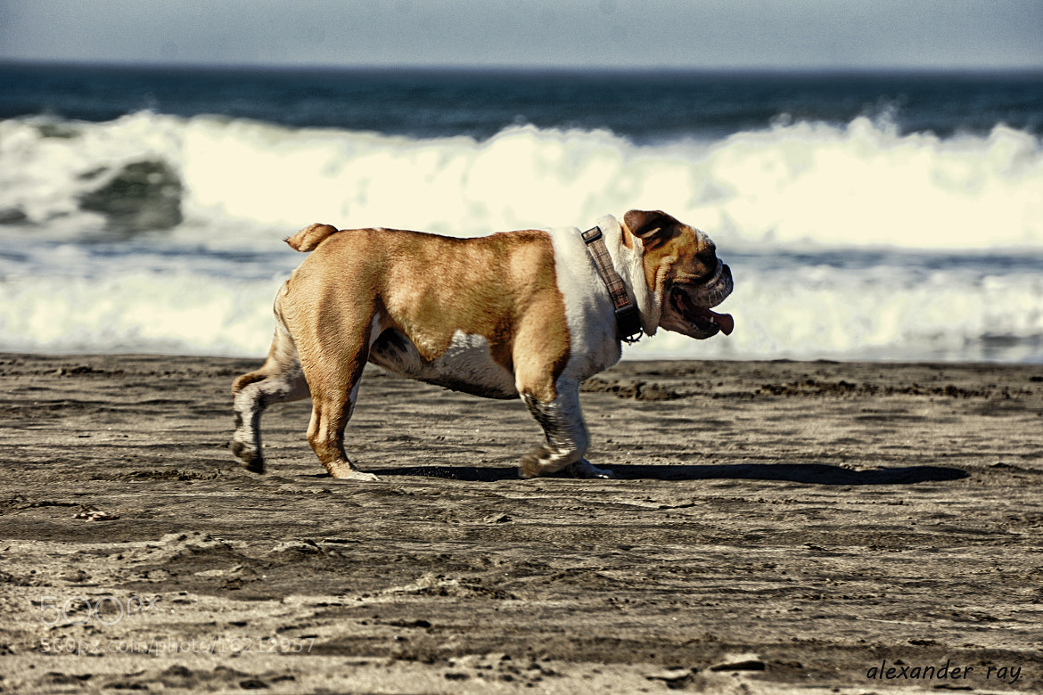 Photograph King of the Beach by Alexander Ray on 500px