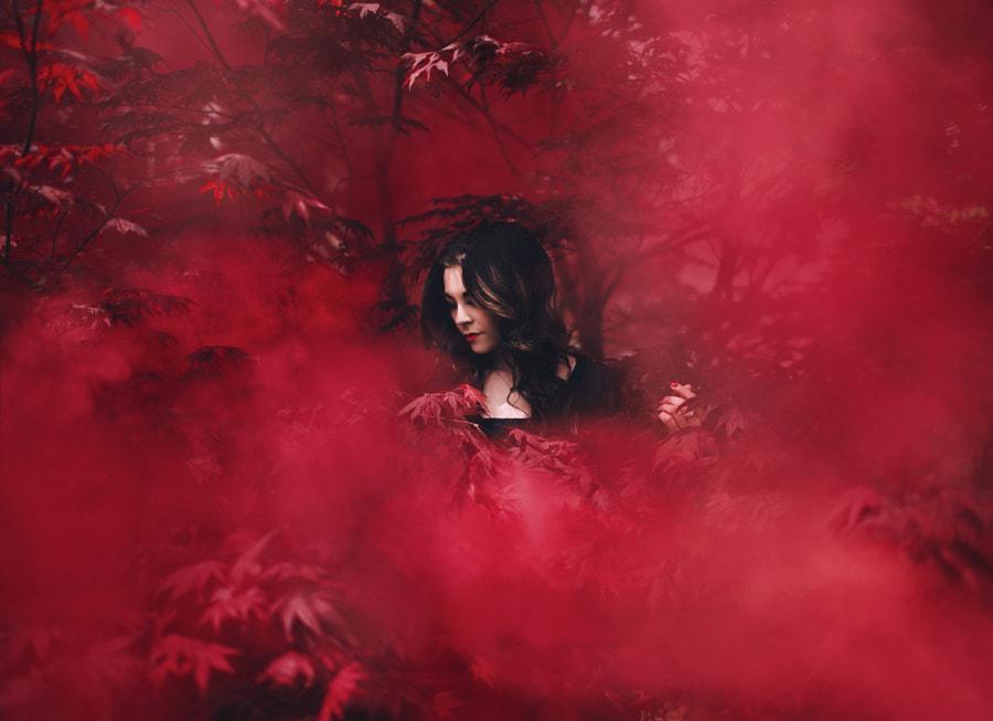 Red velvet by Savannah Daras on 500px.com