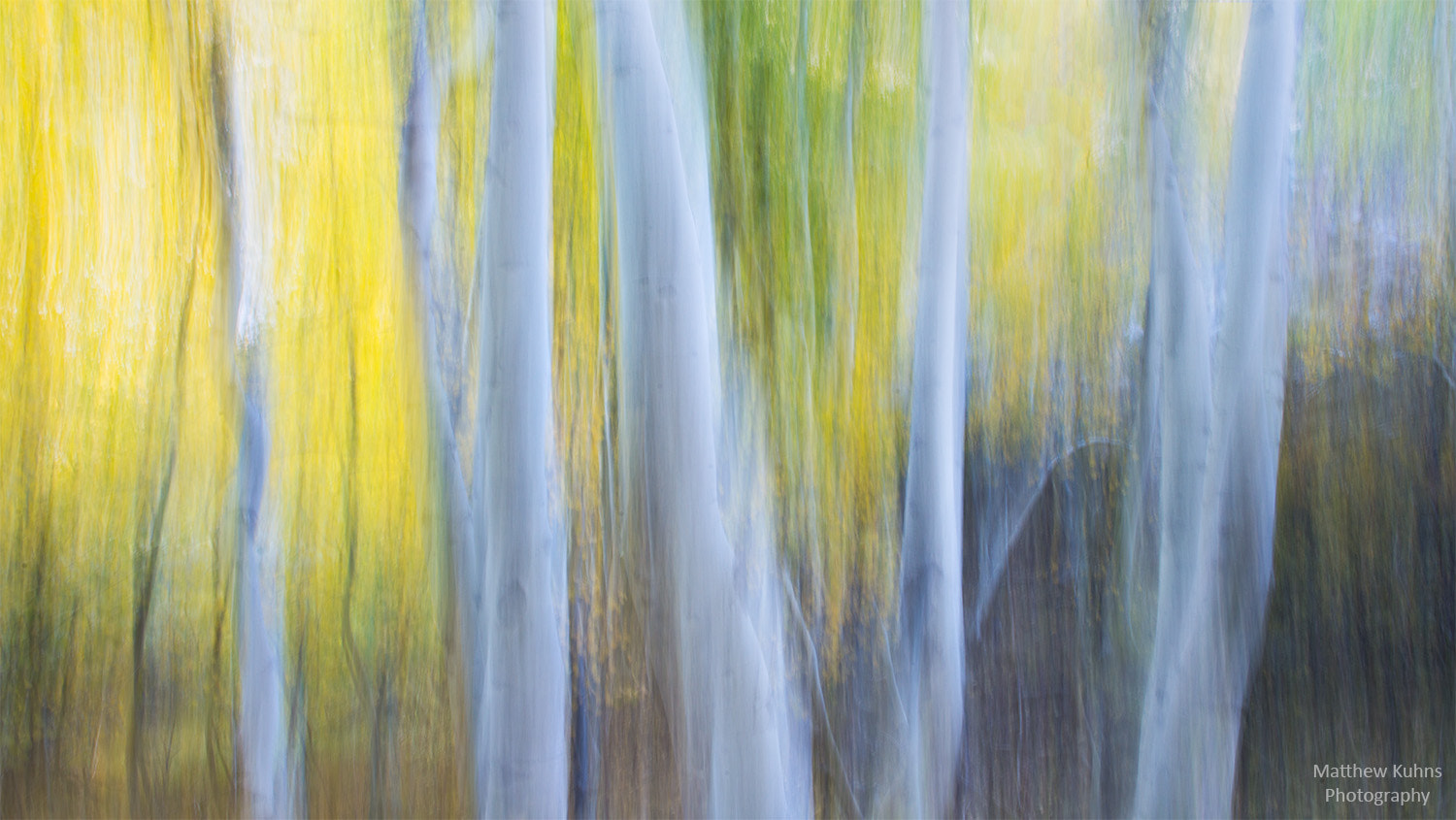 Photograph Pastel Aspens by Matthew Kuhns on 500px