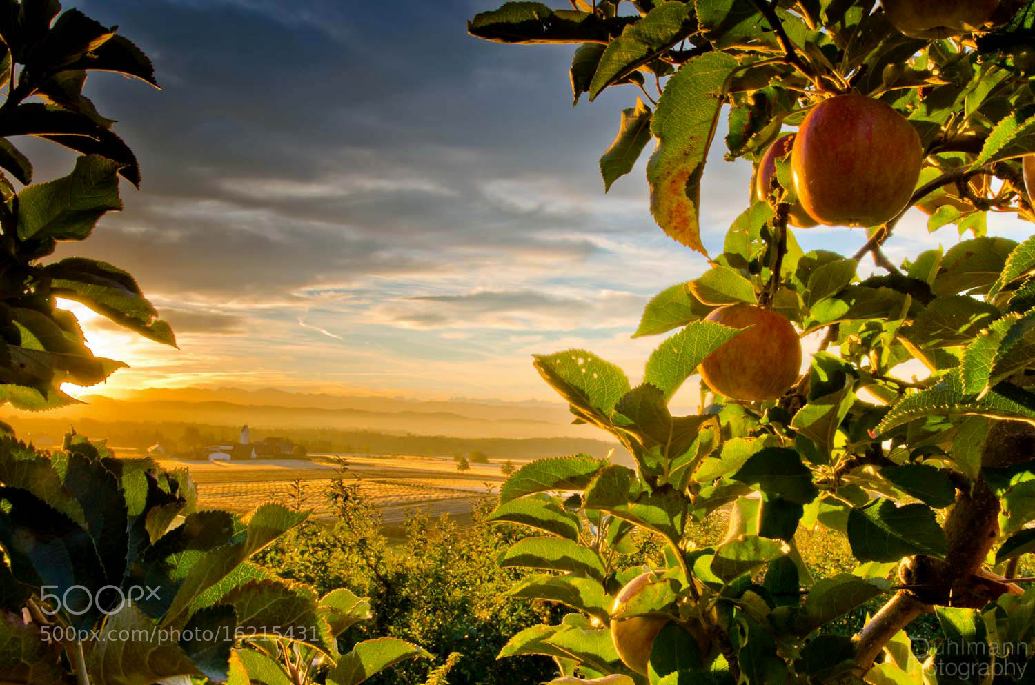 Photograph Fruity Landscape by Claus Puhlmann on 500px