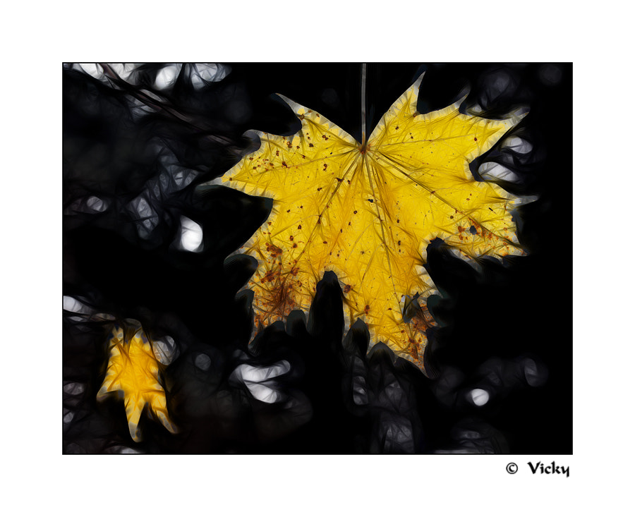 Photograph autumn leaf by Vicky Dens on 500px