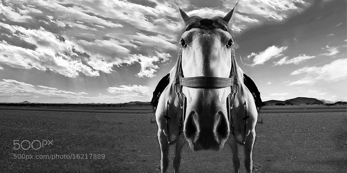 Photograph Big head horse by Hamid alroshoud on 500px