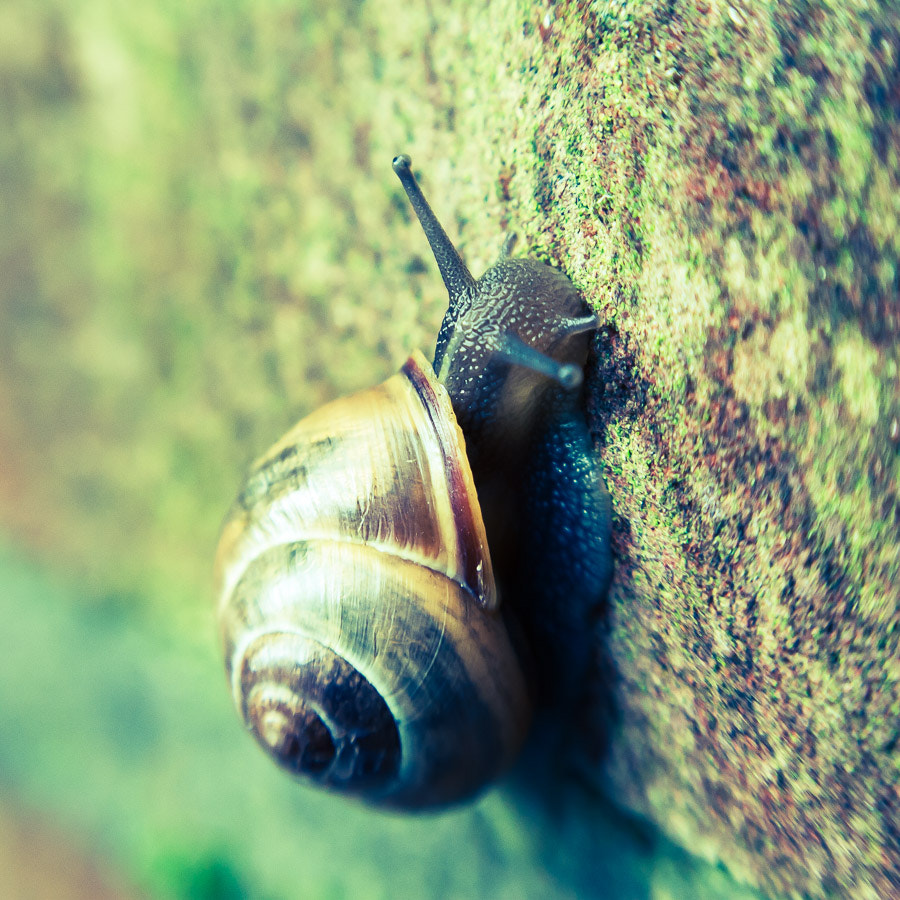 Photograph Snail on a wall by Rob van der Pijll on 500px