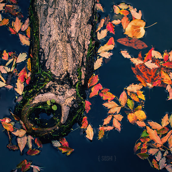 Photograph Another Bit of Autumn by Alex Arnaoudov on 500px