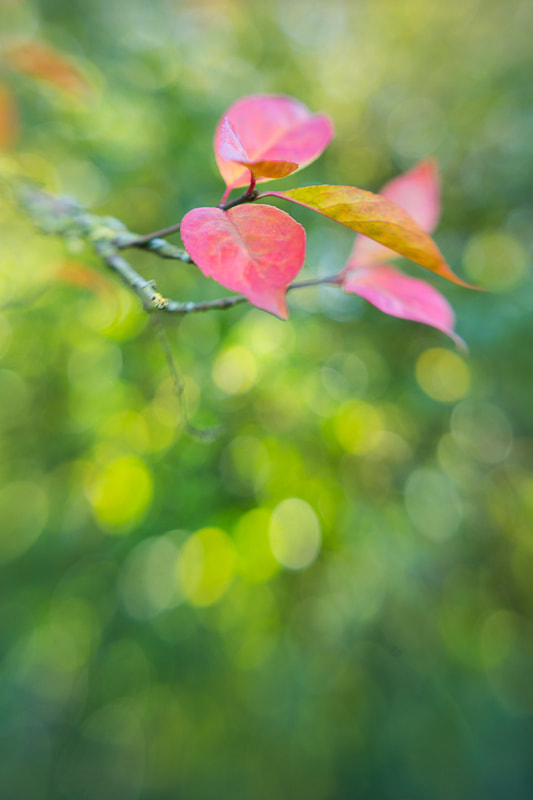 Photograph Lensbaby Leaves by Penny Myles on 500px