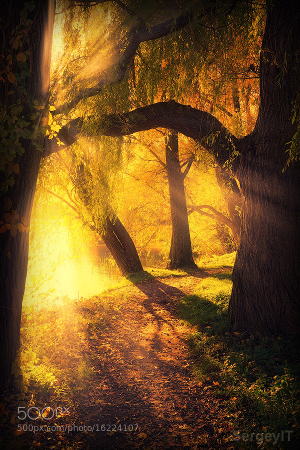 Photograph mysterious pathway between arch of trees by Sergiy Trofimov on 500px