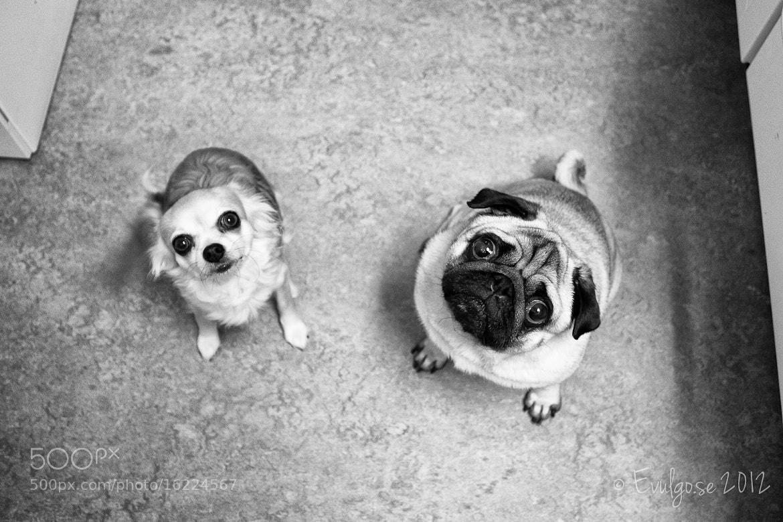 Photograph Got Sausage ?  by Billy Floberg on 500px