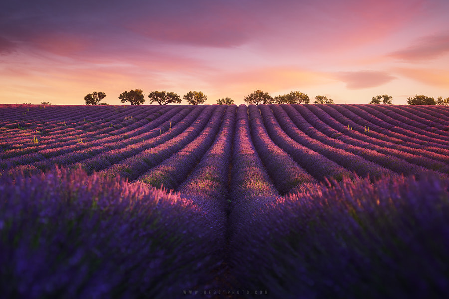 Lavender fields in Provence (Valensole, France) by Beboy Photographies on 500px.com
