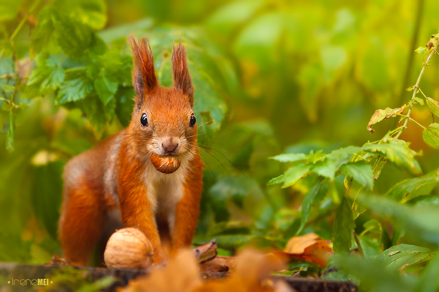 Photograph Nuts about nuts by Irene Mei on 500px