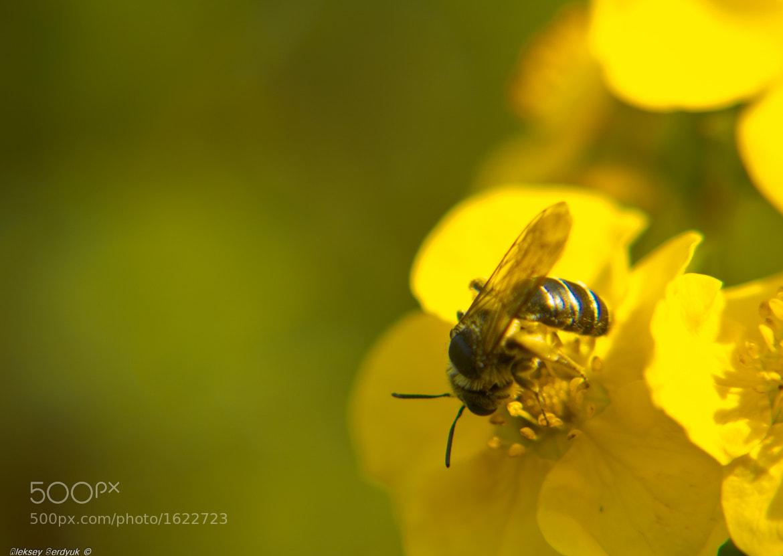Photograph Honey will soon by Aleksey Serdyuk on 500px