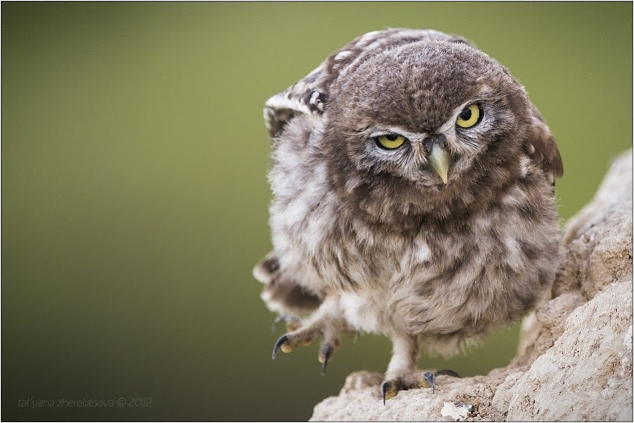 Photograph Angry Birds by Tat'yana Zherebtsova on 500px