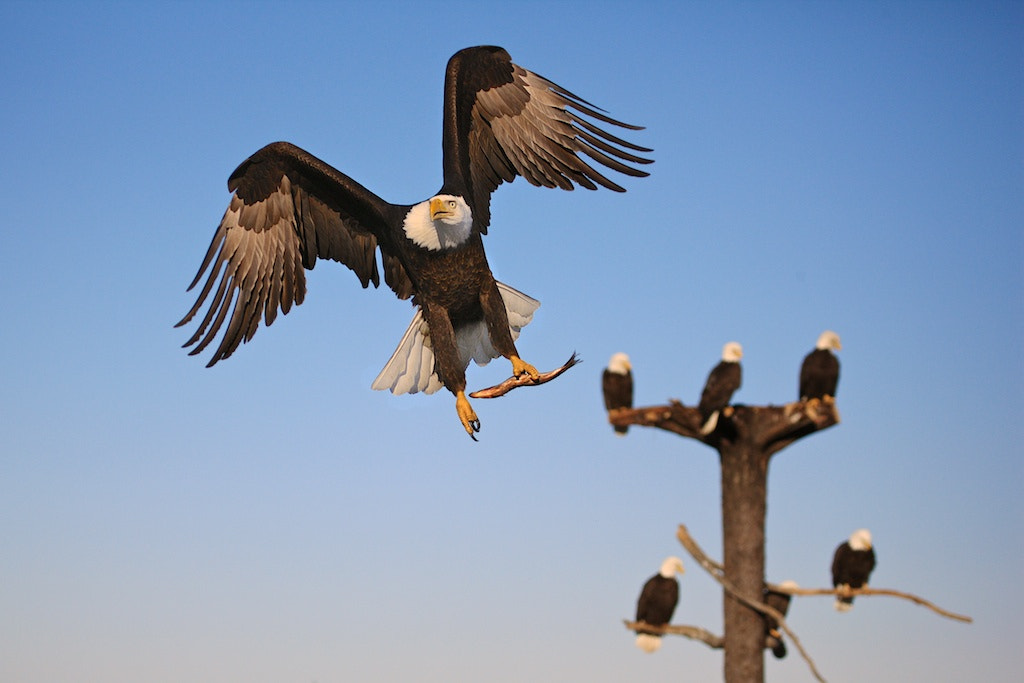 Photograph Up,Up And Away by Buck Shreck on 500px