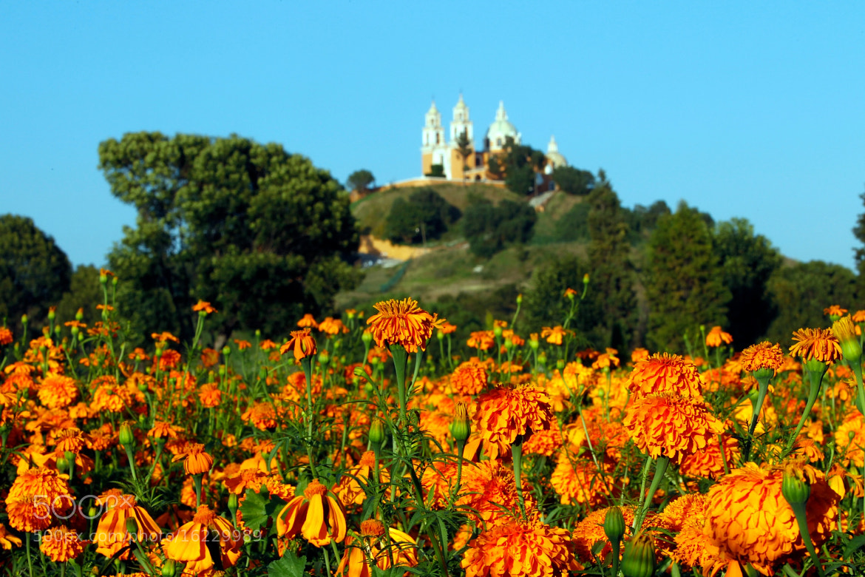 Photograph Orange flowers and Chirch by Cristobal Garciaferro Rubio on 500px