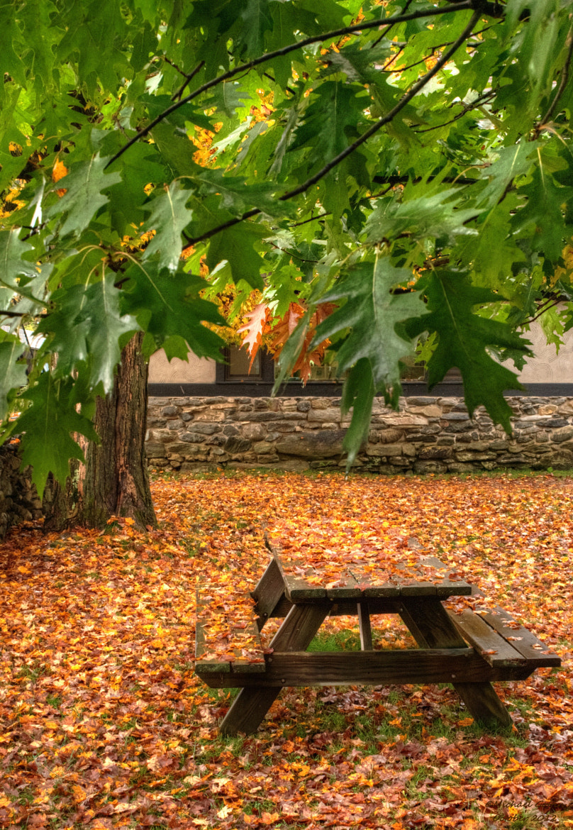 Photograph Picnic table in Autumn by MICHAEL GOFFIN on 500px