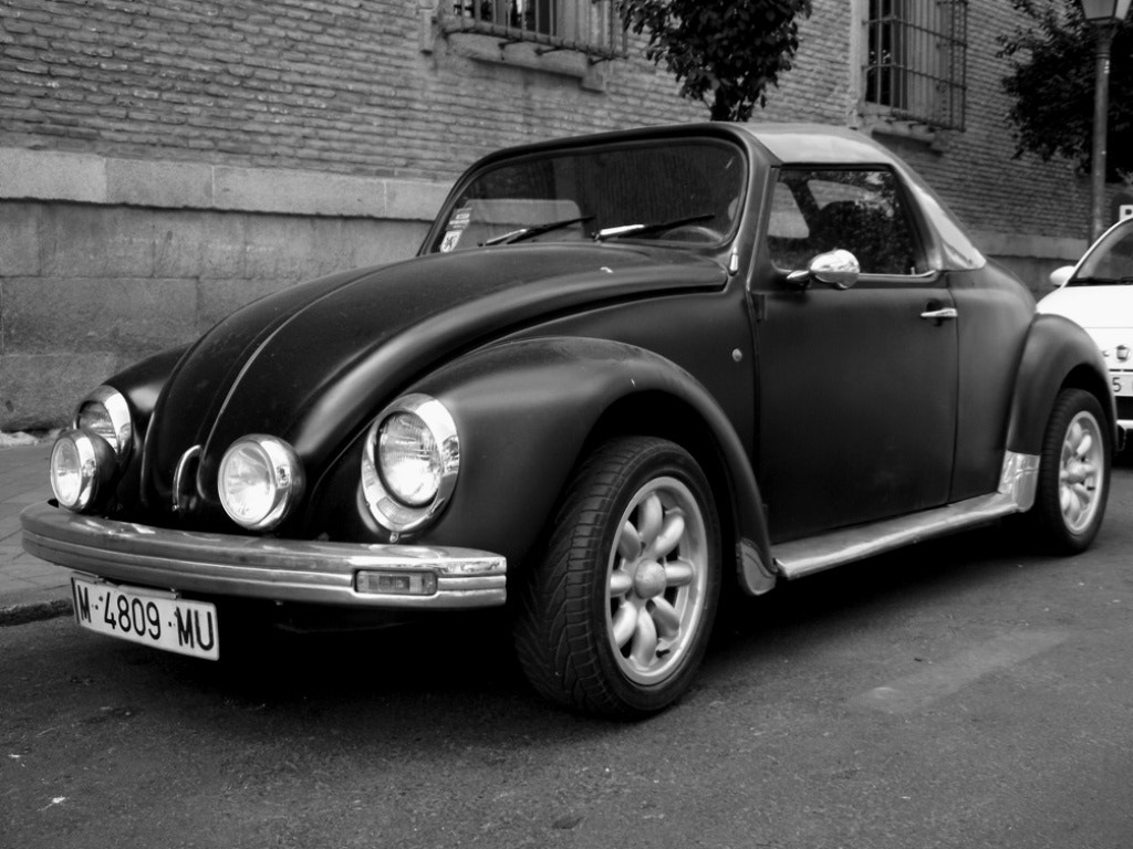 Photograph Timeless Beetle by Look-On Shoot-Down on 500px