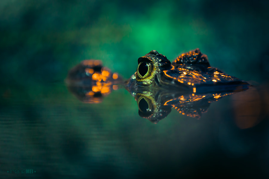Photograph Silent Danger by Irene Mei on 500px