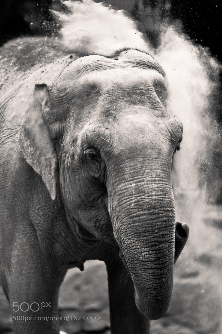 Photograph Elephant and sand by Jens Eklund on 500px