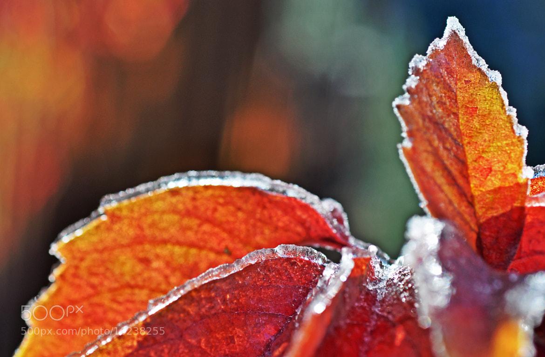 Photograph iced foliage by Elissar Khalek on 500px
