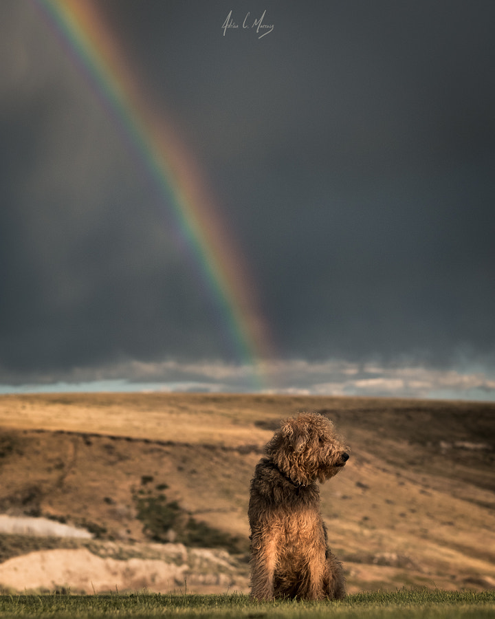 Basking in Idaho Skies by Adrian C. Murray on 500px.com