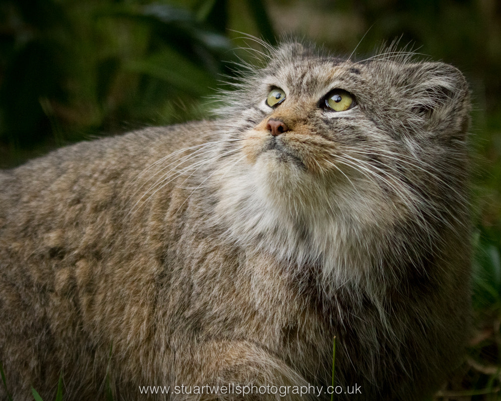 Photograph Fluffy by Stuart Wells on 500px