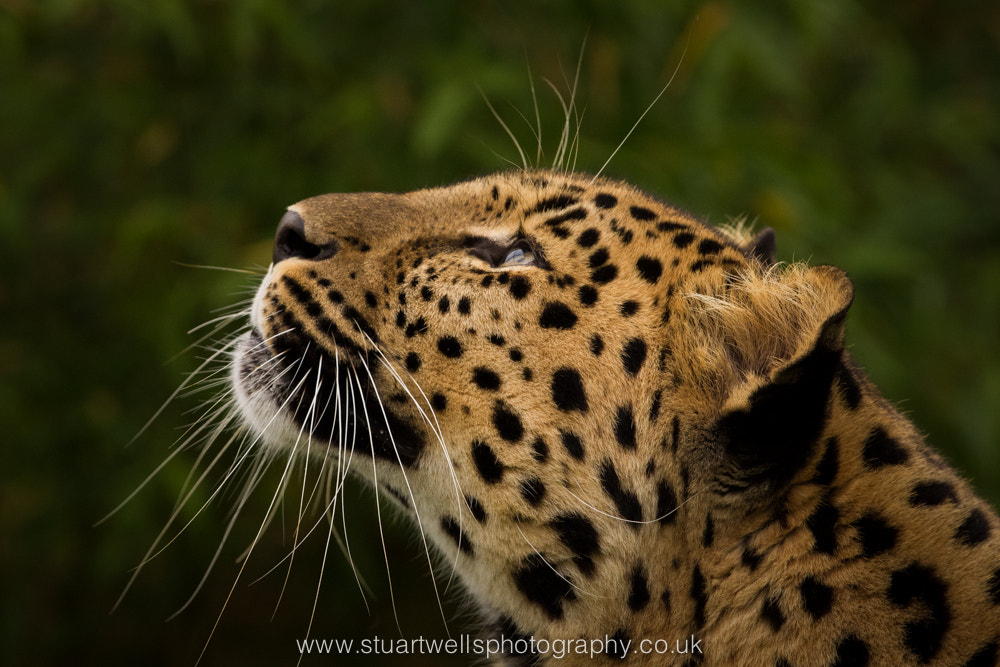 Photograph Looking up by Stuart Wells on 500px